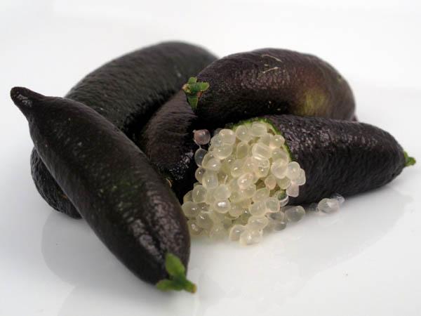 Caviar limes 3