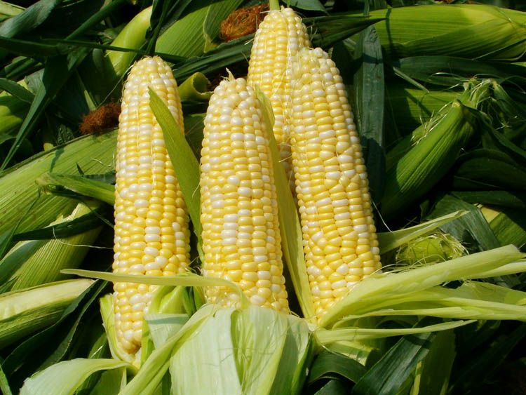 Corn on cob1