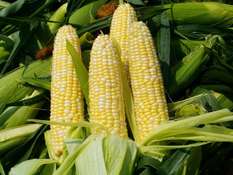 Corn on cob1