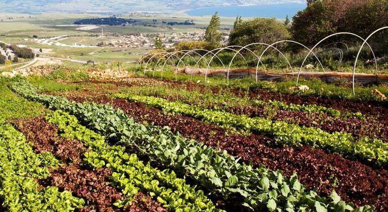 Mizpe Hayamim Spa gardens